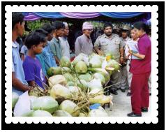 2540-narathiwat-muslim-coconut