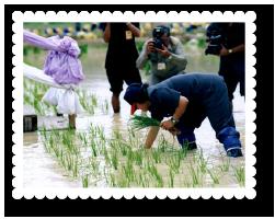 2548-plant-rice-chulachomklao-nakhon-nayok